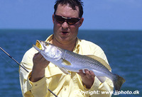 Cynoscion nebulosus, Spotted weakfish: fisheries, gamefish