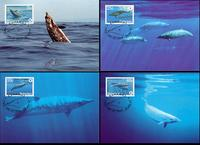 Bahamas Blainville�s Beaked Whale Set of 4 official Maxicards