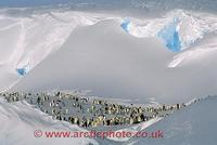 ...FT0104-00: Emperor penguins rest and preen in a sheltered bowl between fantastic snow cornices.