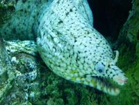 Image of: Muraenidae (moray eels and morays)