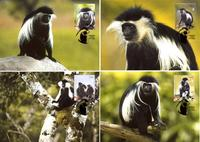 Angola Black-and-white Colobus Set of 4 official Maxicards