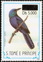 Chestnut-winged Starling, Onychognathus fulgidus