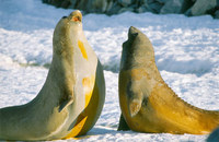 Photo: Seal Pups