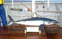 Isurus oxyrinchus, Shortfin mako: fisheries, gamefish