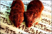 The prairie vole gene made the mice more faithful