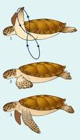 Image of: Cheloniidae (sea turtles)