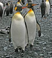 ...Finally, we can take you to the Antarctic region where penguins and albatrosses thrive, and fant
