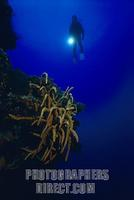 Caribbean underwater world with red sponges and diver , Cuba stock photo