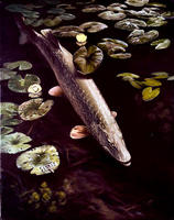Image of: Esox lucius (northern pike)