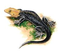 Image of: Gonatodes albogularis (yellow-headed gecko)