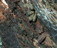 ...Image of: Oligochaeta (angleworms, earthworms, earthworms and their relatives, night crawlers, a