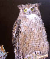 The big & rare Blakiston's Fish Owl has been seen