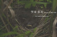 멧새 둥지 Meadow Bunting nest