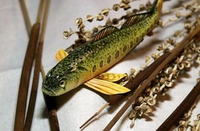 Etheostoma striatulum, Striated darter: