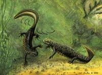 Image of: Salamandridae (newts and salamanders)