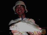 Greenback Jewfish (Johnius solado)