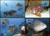 Vanuatu Giant Grouper Set of 4 official Maxicards