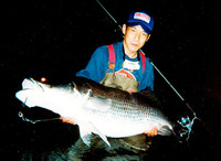Lates japonicus, Japanese lates: fisheries, gamefish