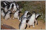 Re: Blue Penguins #3 - Blue Penguins J03.jpg