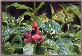cBack Yard Birds -- Cardinal At His Bath -- cardbath.jpg --> Northern Cardinal