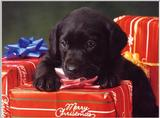 Labradors - first scans     Picture 03 of 13 - dogs11.jpg