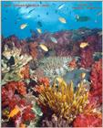 The soft corals of Fiji