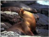 Galapagos - Sea Lions (5 images) 1