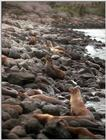 Galapagos - Sea Lions (5 images) 2