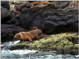 Galapagos - Sea Lions (5 images) 3