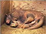 Re: Wanted: Giant Armadillo
