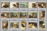 Tortoise Flood - Read this first - Tortoises Index.jpg