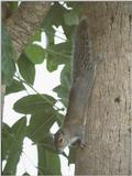 Squirrels and more squirrels - squirrel 9.jpg (1/1)