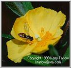 Fly On Flower - ktatlow@xta.com