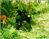 Korean Mammal: Manchurian Black Bear J01 - Young in forest (어린 반달곰)
