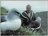 Grey-headed Albatross - david and albatrosses 1.jpg