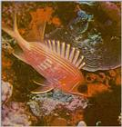 Re: Looking for Caribbean Tropical Fish the more colorful the better - squirrelfish.jpg