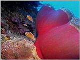 Re: Sea Animals - video captures - gbr014.jpg
