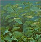 Re: Looking for Caribbean Tropical Fish the more colorful the better - grunts and jacks.jpg