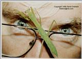 Mantid On Kerry - ktatlow@xta.com.JPG