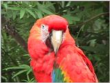 Macaw - Zoo World, Panama City, Florida