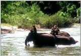 Re: Req pictures of elephants (Asian) - Tha01069.jpg