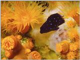 Re: need pics of tropical fish/etc.  2-color... jpg format...