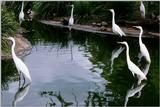 Identification needed - Large Herons? - aay50094.jpg (1/1)