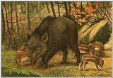 Wild Boars (Painting)
