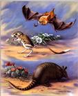 Illustration : Armadillo, Jerboa, and Golden Bat