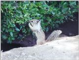June 16 squirrel