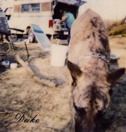 Duke - 003-Dog-by Dennis Ughher.jpg