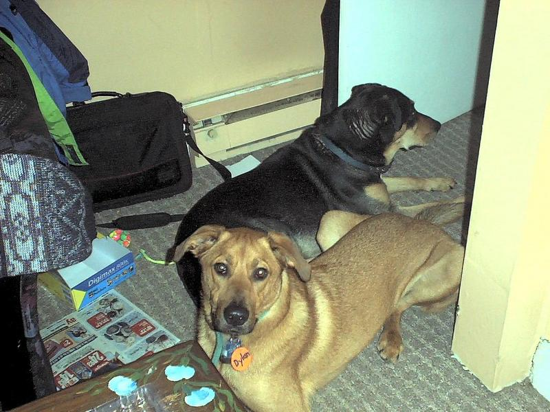 Ex Dylan-Beagle Lab Mix-Dogs-by Mike Sharrard.jpg