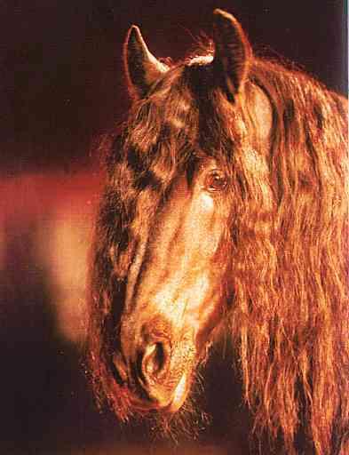 Horse-Head01-Brown Horse-by Trudie Waltman.jpg