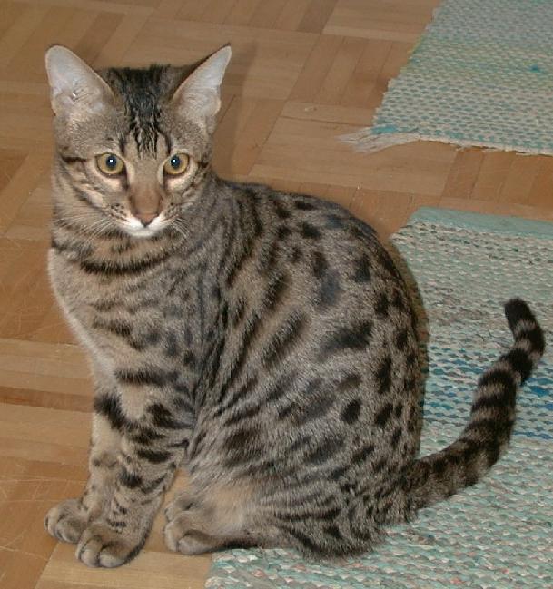 fancy feast cat food recall